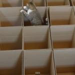 Cat Box Heaven