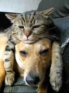 Cat Laying on Dog