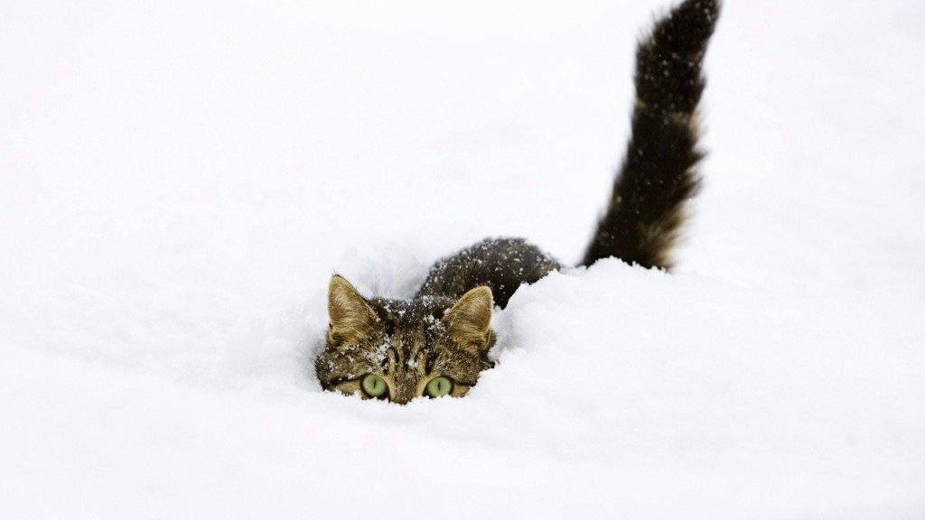 Cat hiding in snow