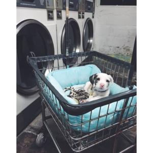 Laundromat Puppy