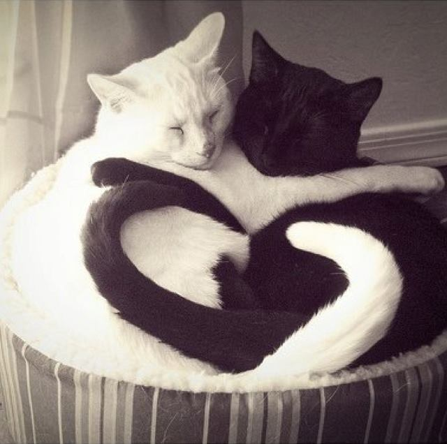 Black and White Love