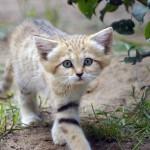 Permanent Kittens