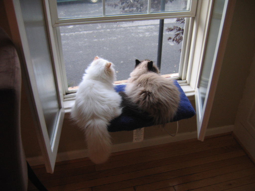 Cats in Windows – FuzzFeed