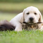 Puppy, there's a cat under you.