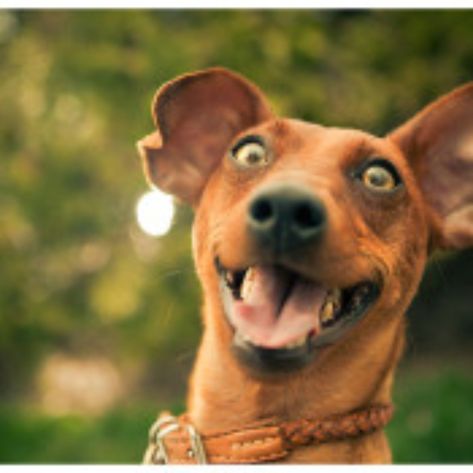 Can You Make A Dog Laugh