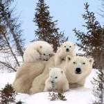 Adorable Animal Families