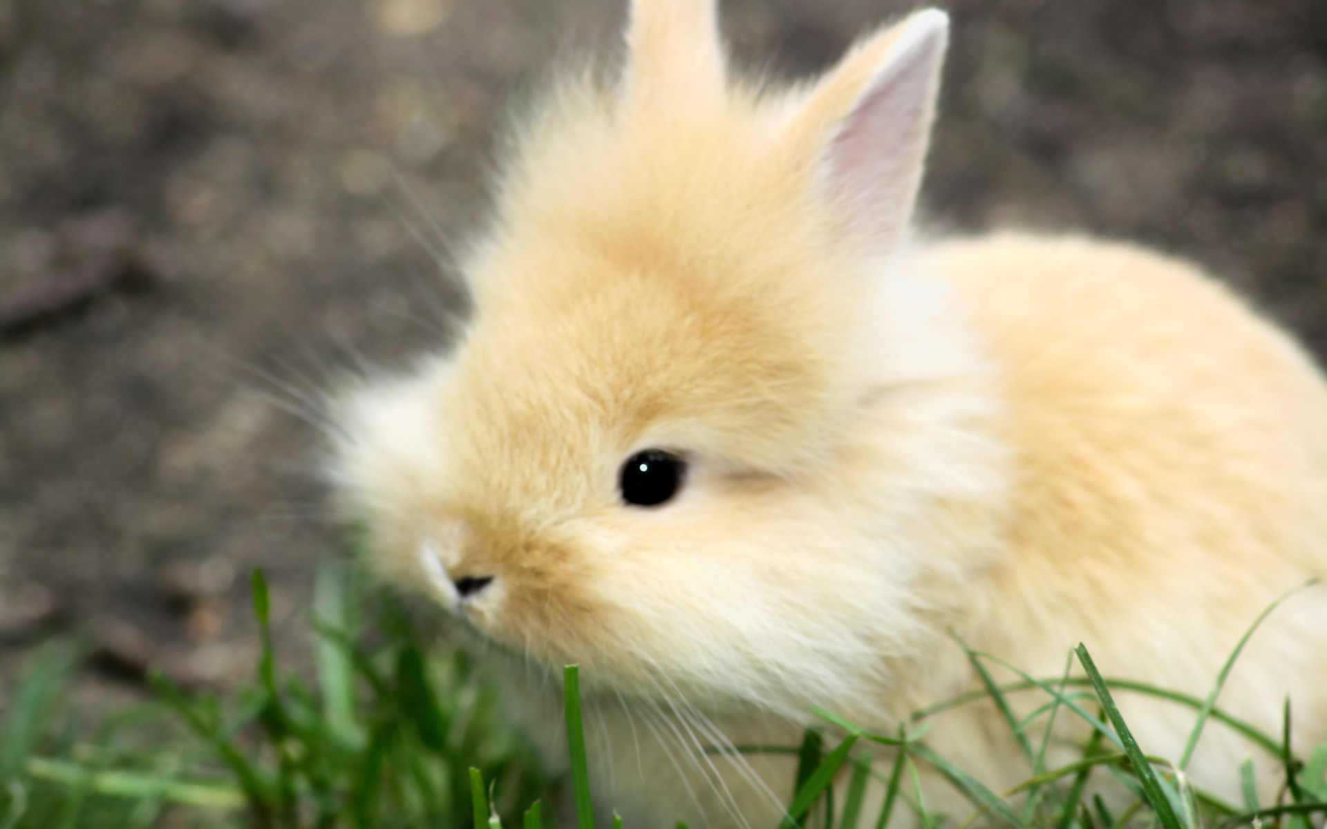 cute baby bunny photo
