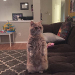 George the Standing Cat