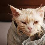 Bathed pets
