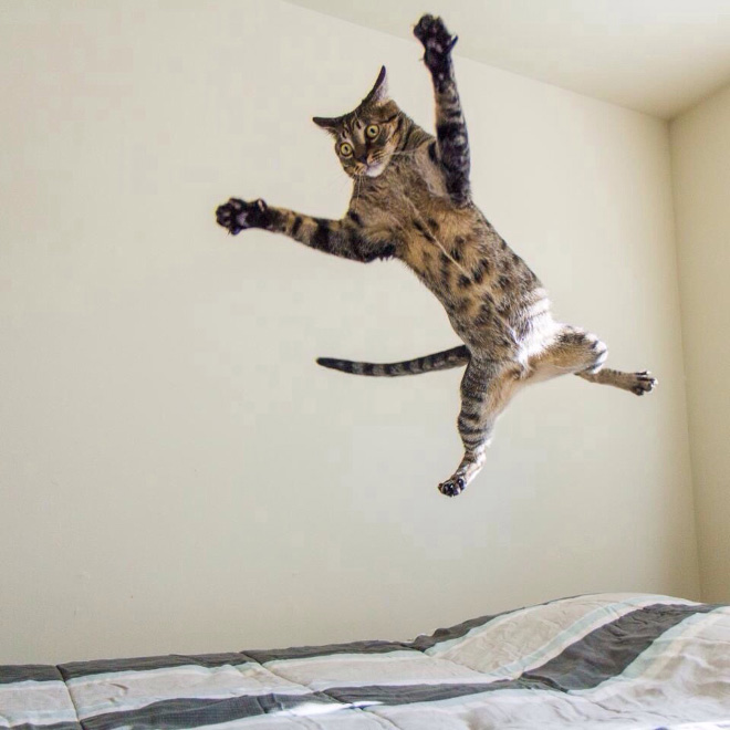 Flying Cats Fuzzfeed