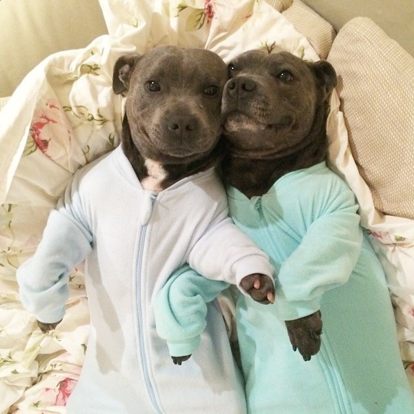 Puppies In Onesies Fuzzfeed