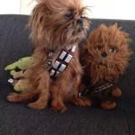Star Wars Pups – The Fuzz Awakens