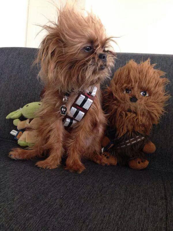 Wookie Puppy
