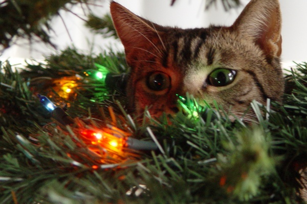 cats and christmas trees � fuzzfeed