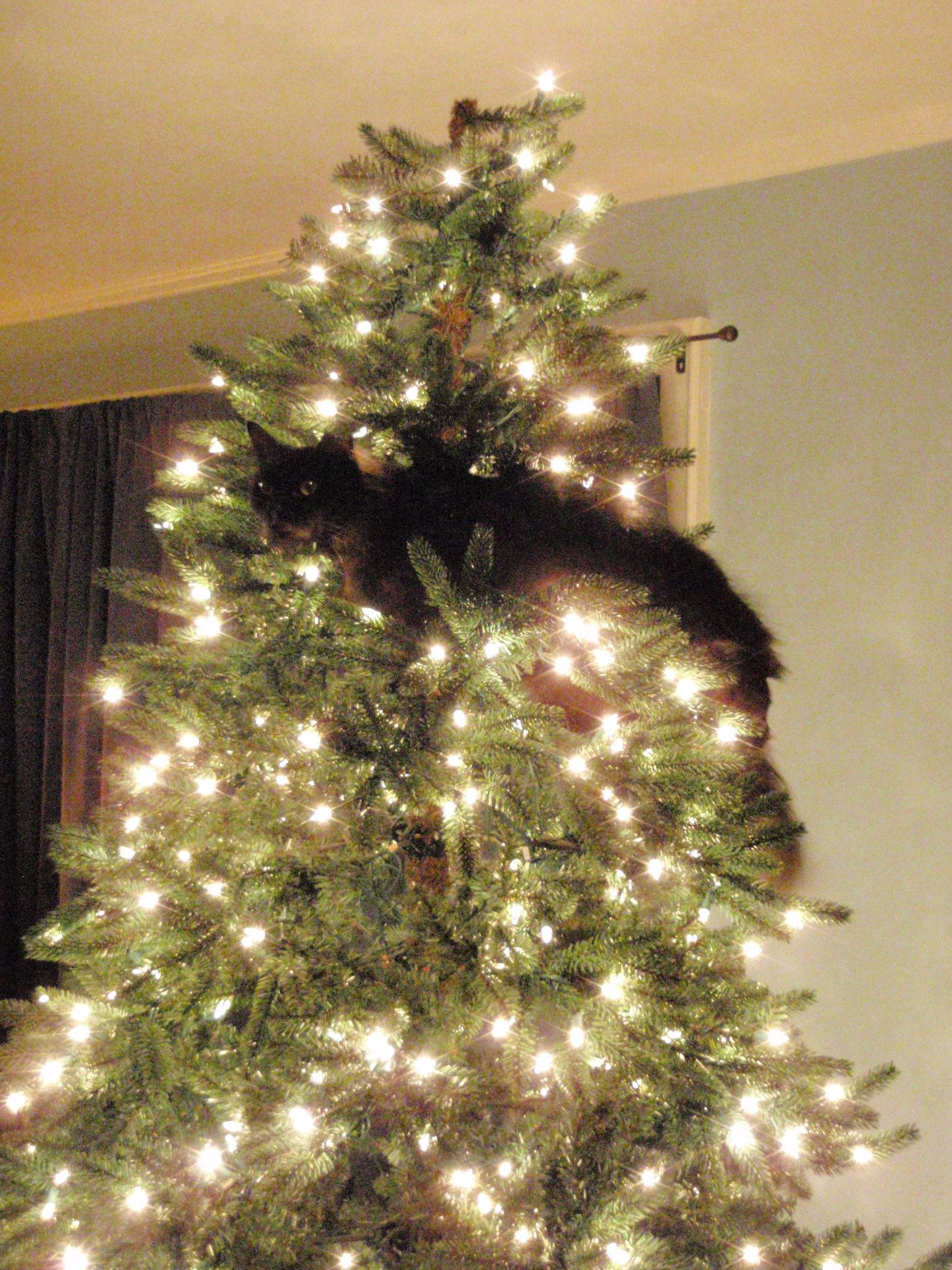 Cats Vs Christmas Trees.Cats And Christmas Trees Fuzzfeed