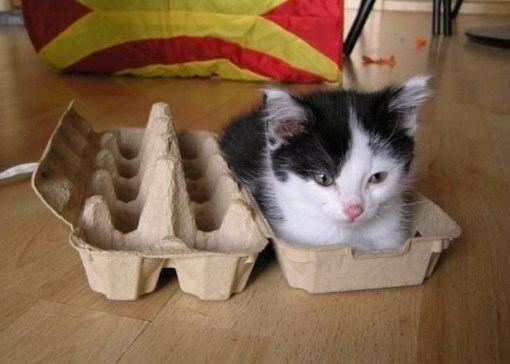 Cute kitten in egg carton