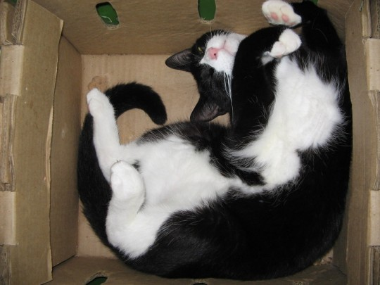 Cat happy sleeping in a box