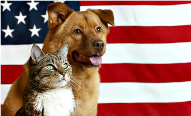 Patriotic Pets for Labor Day