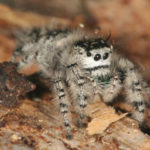 Cute Fuzzy Spiders