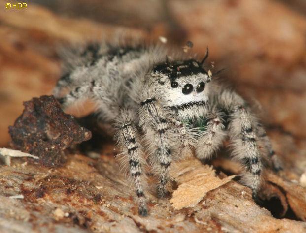 Cute Fuzzy Spider