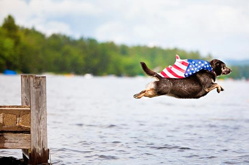 Dog leaping wearing a flag