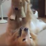 Adorable Golden Stuffed Animal