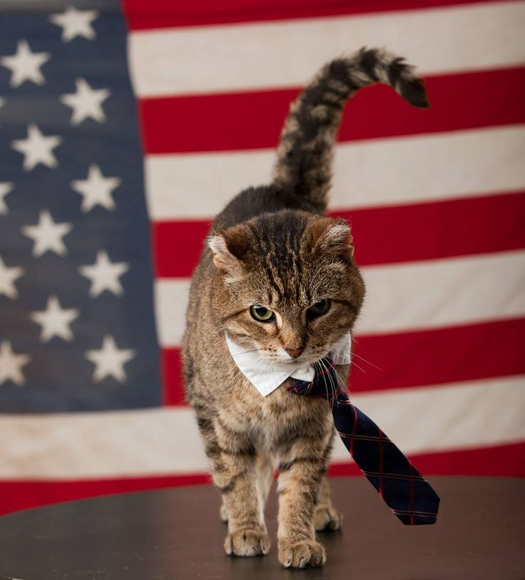 Cat wearing neck tie in front of a flag