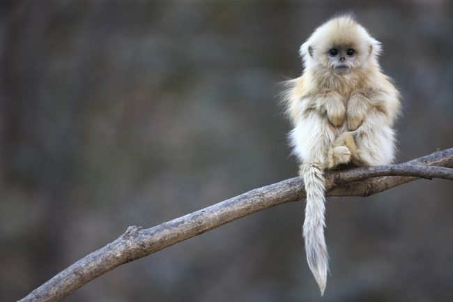 Cute furry monkey in a tree