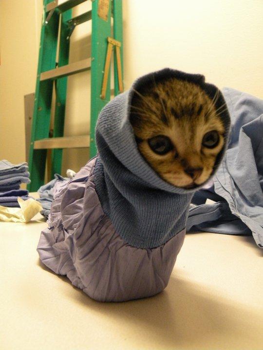 Cat-er-pillar