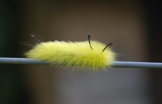 Fuzzy Wuzzy was a caterpillar.