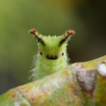 Caterpillars are Cute and Fuzzy