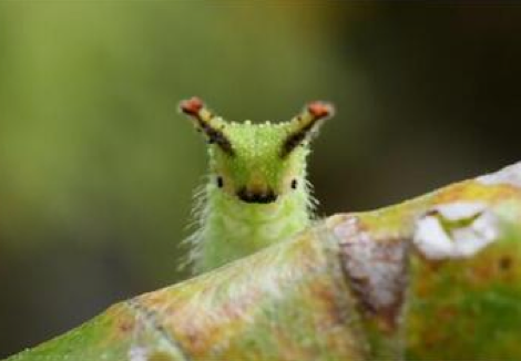 greencaterpillar.png