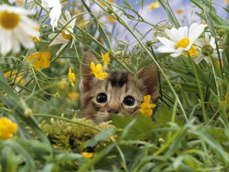 Spring Fuzziness Fuzzfeed