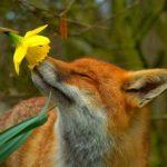 Spring Fuzziness