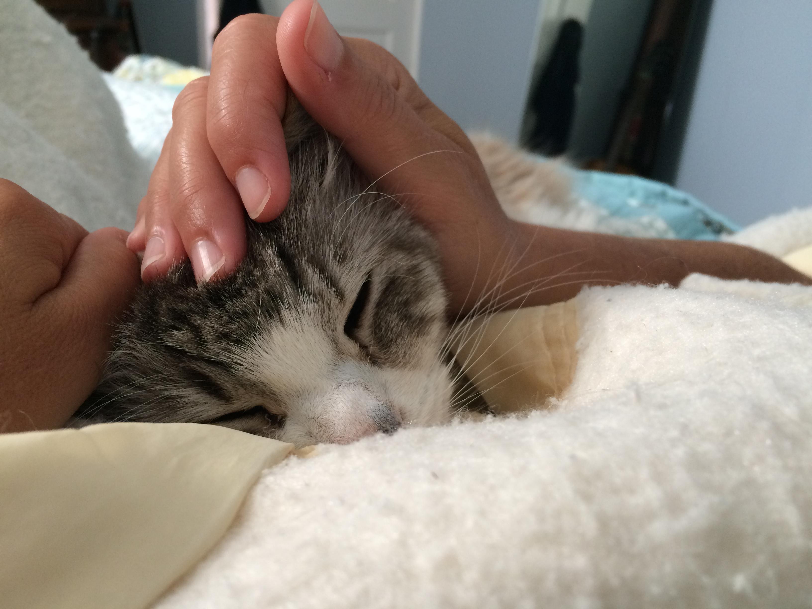 Leroo snuggling