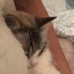 Cuddly, Fuzzy Leroo