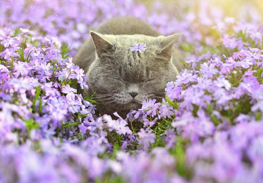 Catnap in Flowers