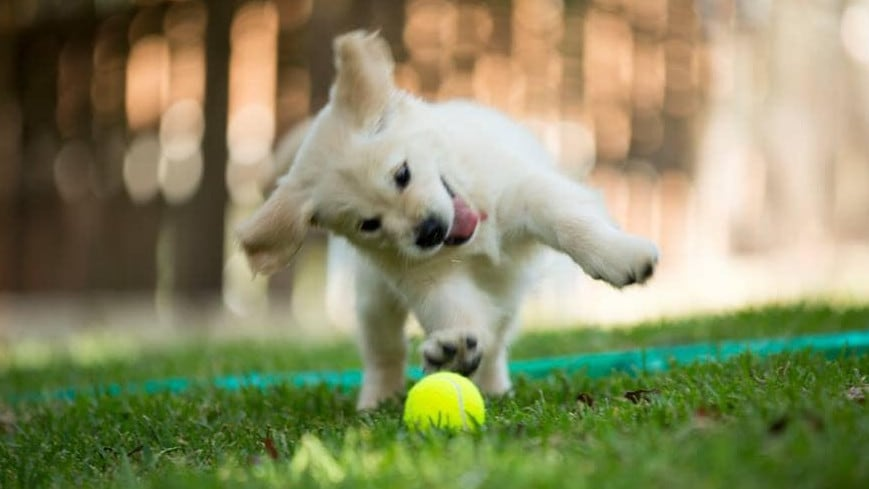 Happy dog with a ball