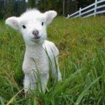 Cute Baby Animals for Spring